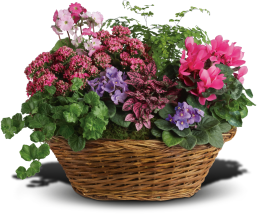 Simply Chic Mixed Plant Basket